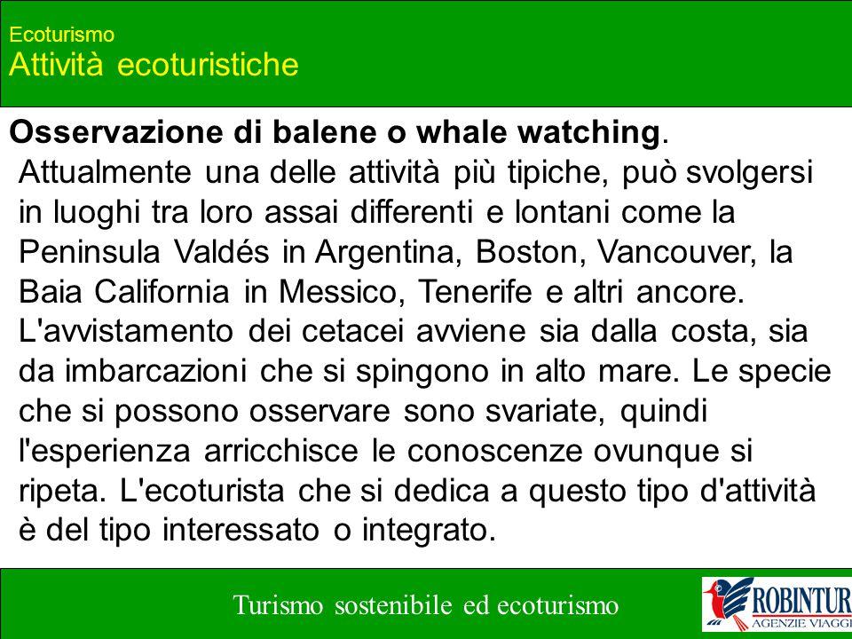 Turismo sostenibile ed ecoturismo Ecoturismo Attività ecoturistiche Osservazione di balene o whale watching. Attualmente una delle attività più tipich