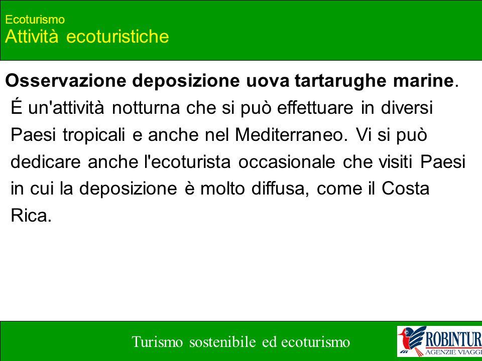 Turismo sostenibile ed ecoturismo Ecoturismo Attività ecoturistiche Osservazione deposizione uova tartarughe marine. É un'attività notturna che si può