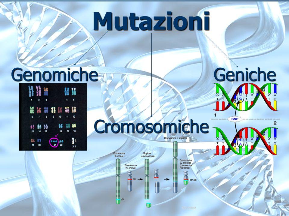 Mutazioni Mutazioni Genomiche Geniche Cromosomiche Cromosomiche