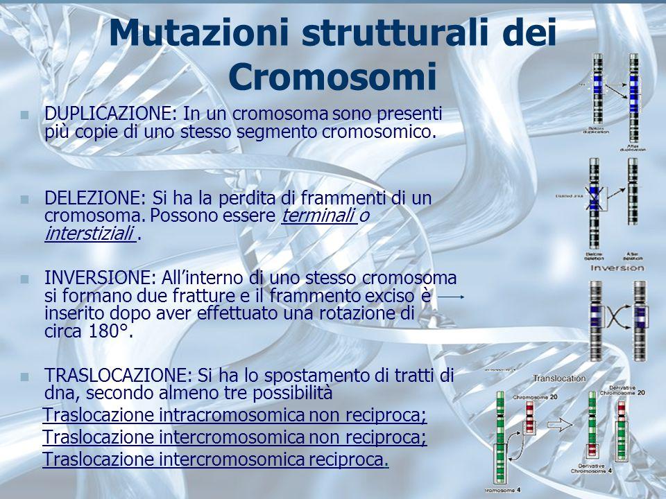 Mutazioni strutturali dei Cromosomi DUPLICAZIONE: In un cromosoma sono presenti più copie di uno stesso segmento cromosomico.