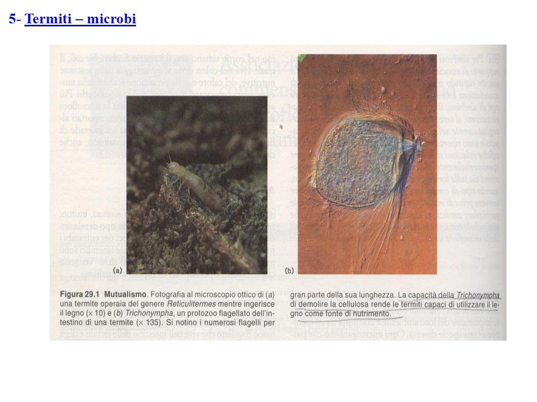 5- Termiti – microbi