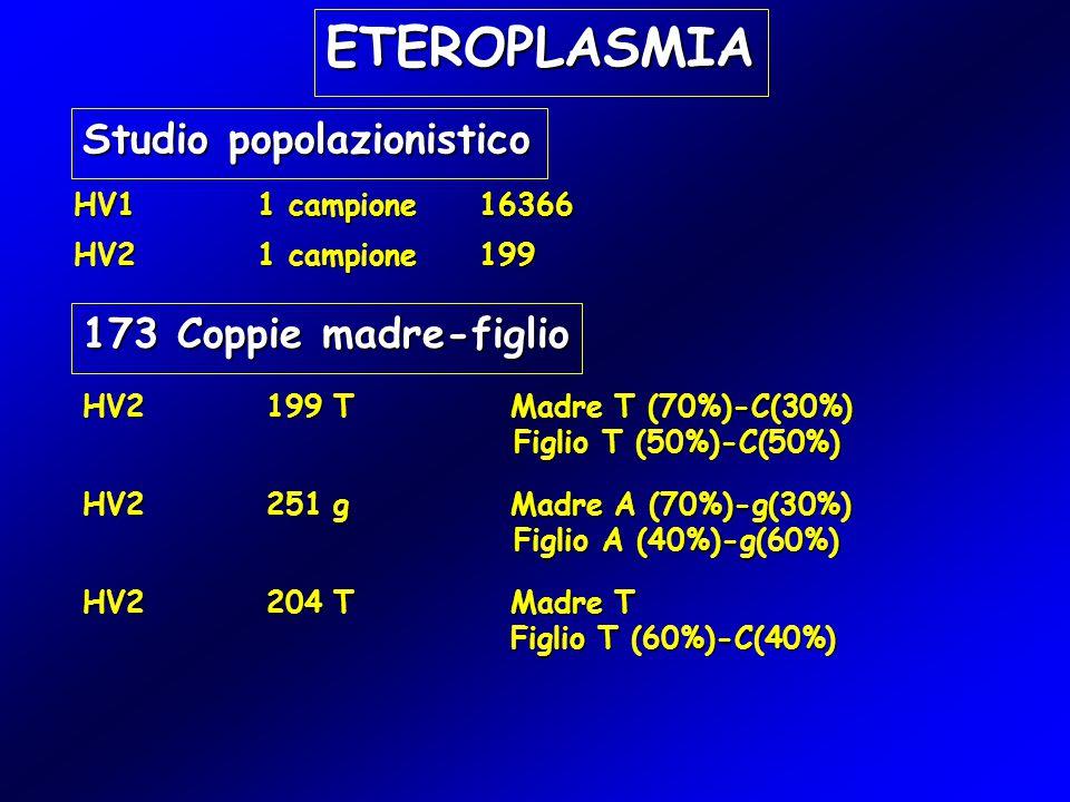 HV1 1 campione 16366 ETEROPLASMIA Studio popolazionistico HV2 1 campione 199 173 Coppie madre-figlio HV2 199 TMadre T (70%)-C(30%) Figlio T (50%)-C(50%) Figlio T (50%)-C(50%) HV2 251 gMadre A (70%)-g(30%) Figlio A (40%)-g(60%) Figlio A (40%)-g(60%) HV2 204 TMadre T Figlio T (60%)-C(40%)