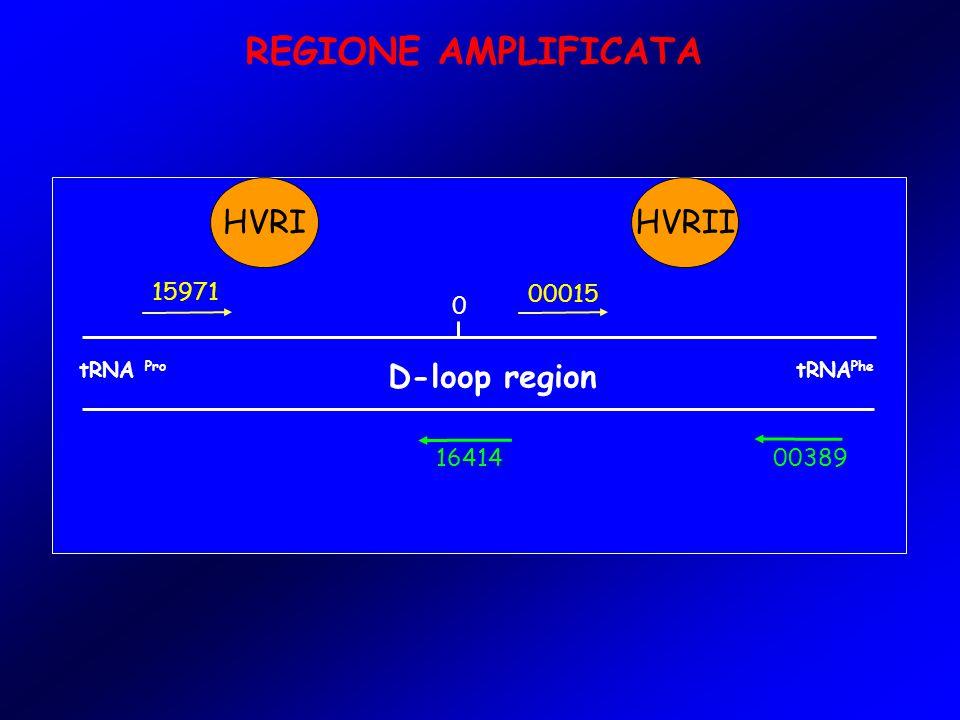 REGIONE AMPLIFICATA tRNA Pro D-loop region tRNA Phe 0 15971 00015 0038916414 HVRIHVRII