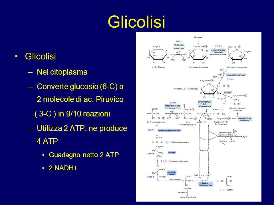 Glicolisi –Nel citoplasma –Converte glucosio (6-C) a 2 molecole di ac. Piruvico ( 3-C ) in 9/10 reazioni –Utilizza 2 ATP, ne produce 4 ATP Guadagno ne