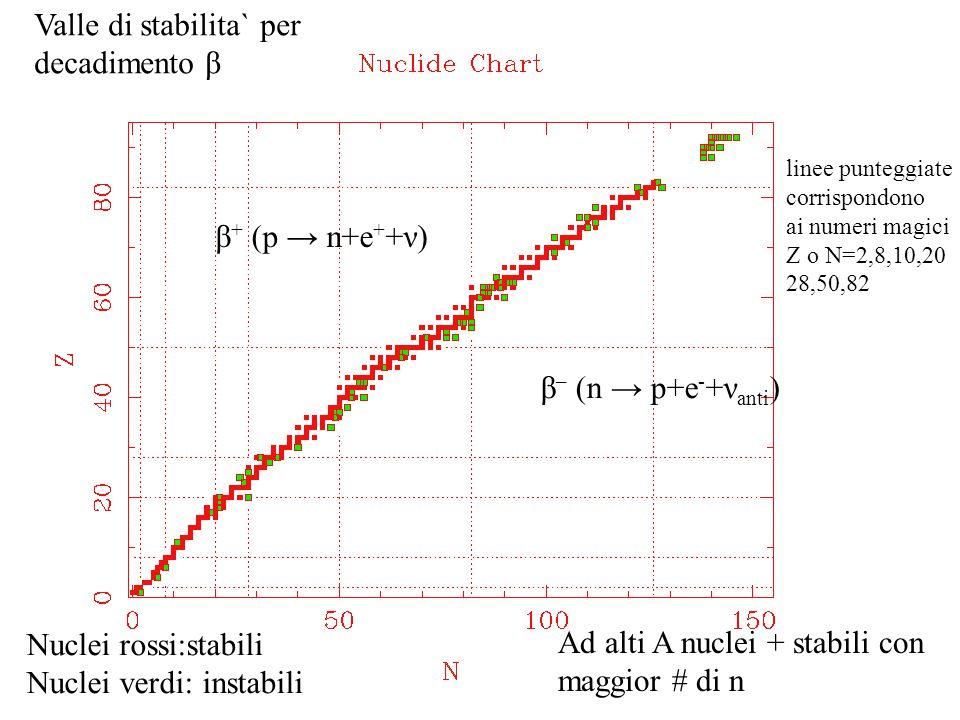 Valle di stabilita` per decadimento β Nuclei rossi:stabili Nuclei verdi: instabili β – (n → p+e - +ν anti ) β + (p → n+e + +ν) Ad alti A nuclei + stab