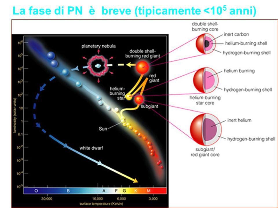 La fase di PN è breve (tipicamente <10 5 anni)