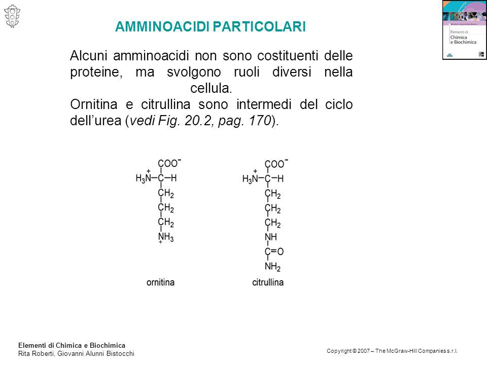 Elementi di Chimica e Biochimica Rita Roberti, Giovanni Alunni Bistocchi Copyright © 2007 – The McGraw-Hill Companies s.r.l. AMMINOACIDI PARTICOLARI A