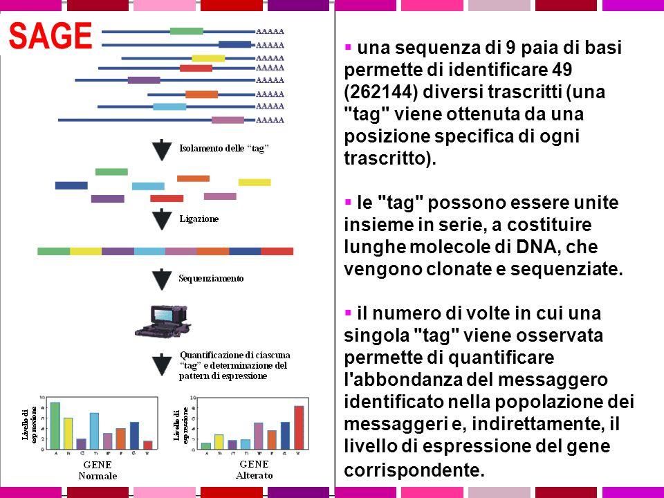  una sequenza di 9 paia di basi permette di identificare 49 (262144) diversi trascritti (una