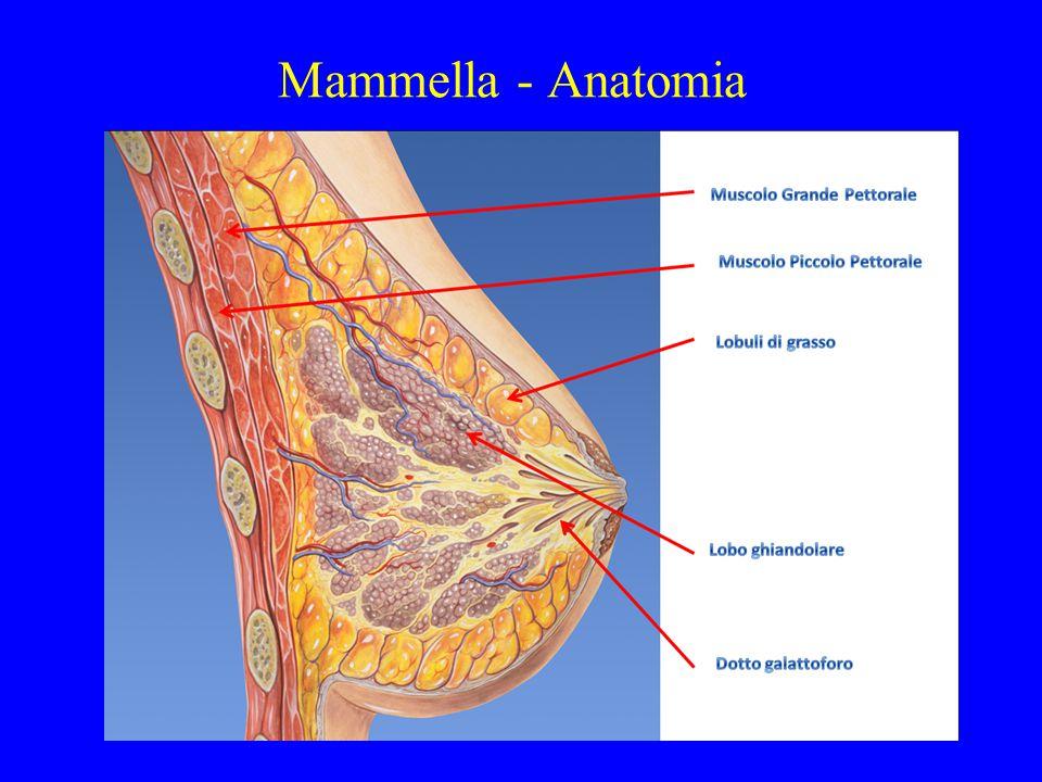 Cancro della mammella Riduzione della mortalità (UK 1970-2000) 21,3% (età 55 - 69) Contributo 6,4% : screening 14,9 % : terapia (Blanks BMJ 2000;321:655-9)
