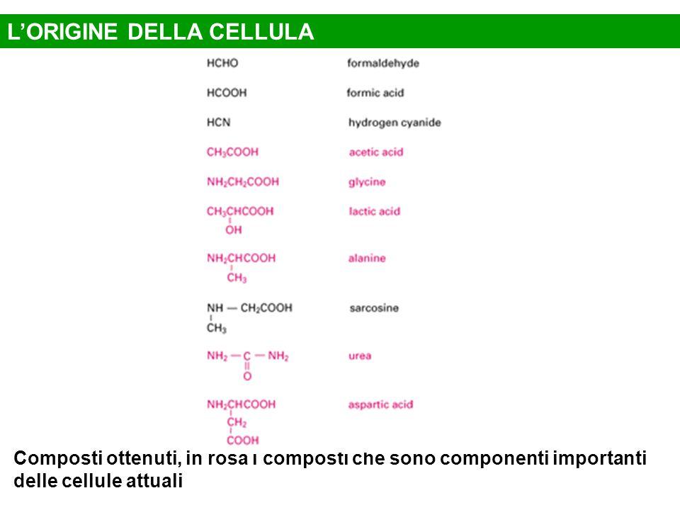 Composti ottenuti, in rosa i composti che sono componenti importanti delle cellule attuali L'ORIGINE DELLA CELLULA