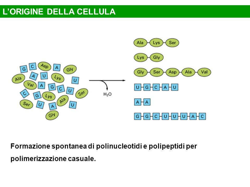Formazione spontanea di polinucleotidi e polipeptidi per polimerizzazione casuale. L'ORIGINE DELLA CELLULA