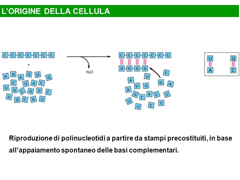 Riproduzione di polinucleotidi a partire da stampi precostituiti, in base all'appaiamento spontaneo delle basi complementari.