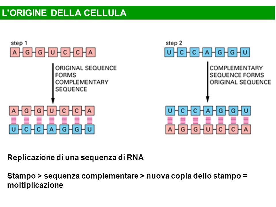 L'ORIGINE DELLA CELLULA Replicazione di una sequenza di RNA Stampo > sequenza complementare > nuova copia dello stampo = moltiplicazione