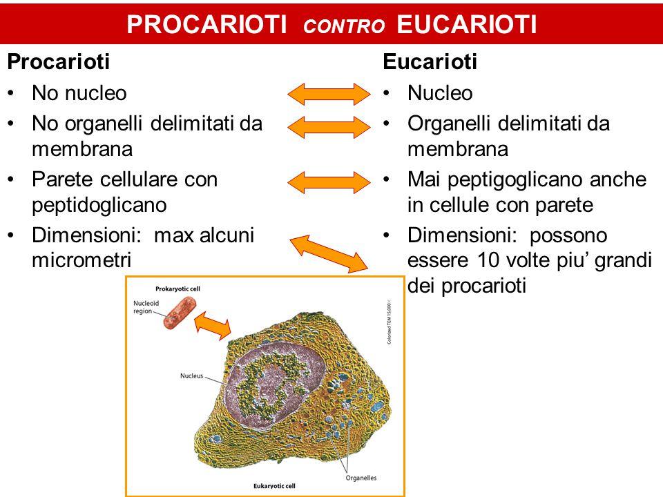 PROCARIOTI CONTRO EUCARIOTI Procarioti No nucleo No organelli delimitati da membrana Parete cellulare con peptidoglicano Dimensioni: max alcuni microm