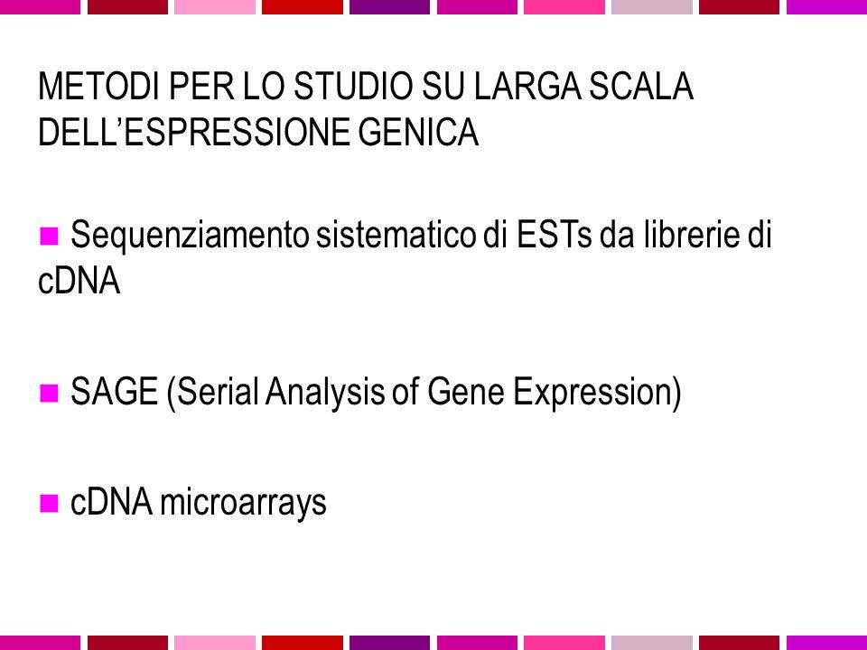 mRNA of different genes cDNA LIBRARY EST SEQUENCING EST