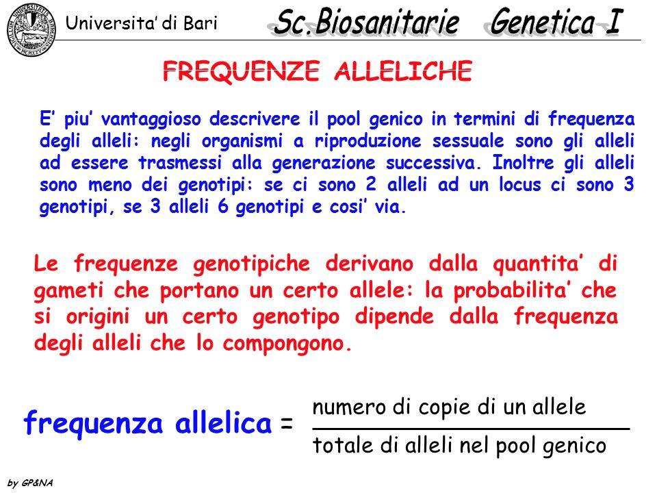 FREQUENZE ALLELICHE E' piu' vantaggioso descrivere il pool genico in termini di frequenza degli alleli: negli organismi a riproduzione sessuale sono g