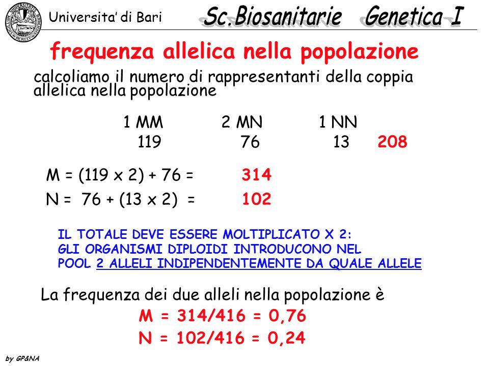 frequenza allelica nella popolazione calcoliamo il numero di rappresentanti della coppia allelica nella popolazione 1 MM2 MN1 NN 119 76 13 208 M = (11