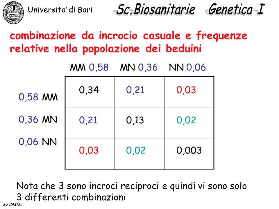 combinazione da incrocio casuale e frequenze relative nella popolazione dei beduini MM 0,58 MN 0,36 NN 0,06 MM MN NN 0,58 0,36 0,06 0,34 0,21 0,03 0,2