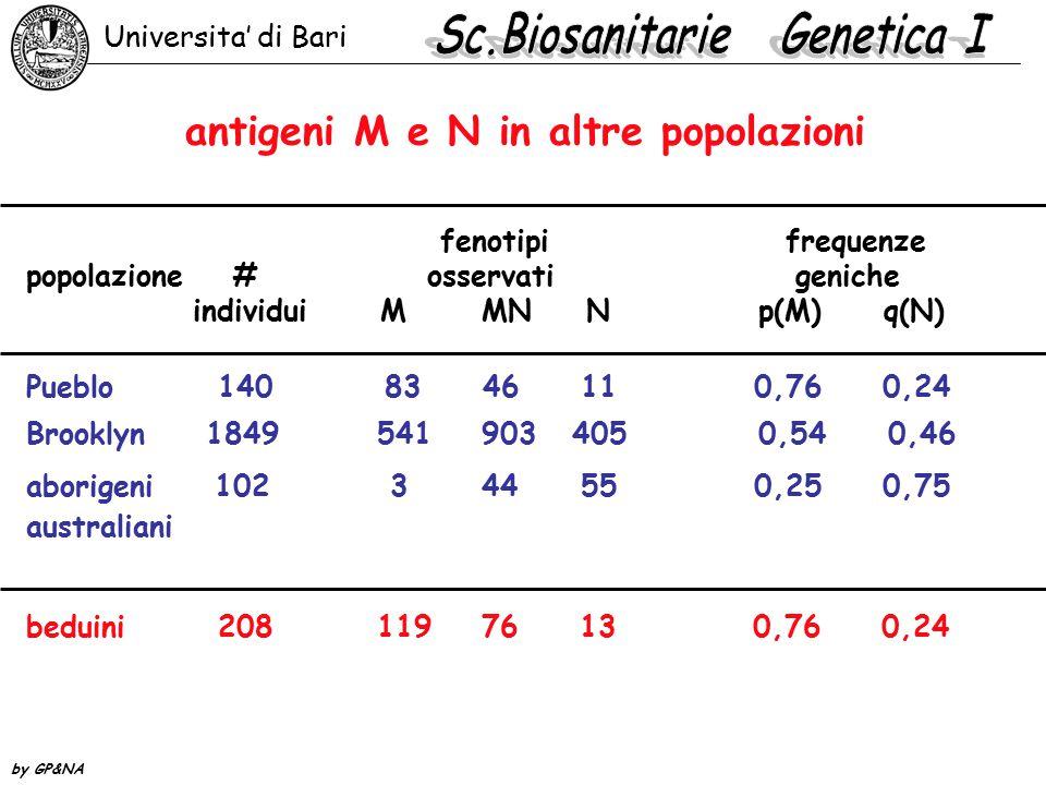 antigeni M e N in altre popolazioni fenotipi frequenze popolazione # osservati geniche individui M MN N p(M) q(N) Pueblo 140 83 46 11 0,76 0,24 Brookl