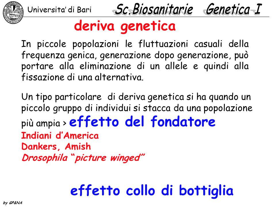deriva genetica In piccole popolazioni le fluttuazioni casuali della frequenza genica, generazione dopo generazione, può portare alla eliminazione di