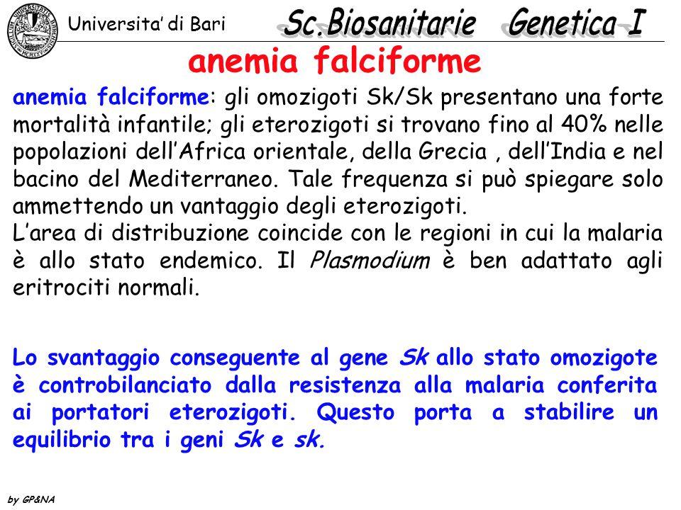anemia falciforme anemia falciforme: gli omozigoti Sk/Sk presentano una forte mortalità infantile; gli eterozigoti si trovano fino al 40% nelle popola