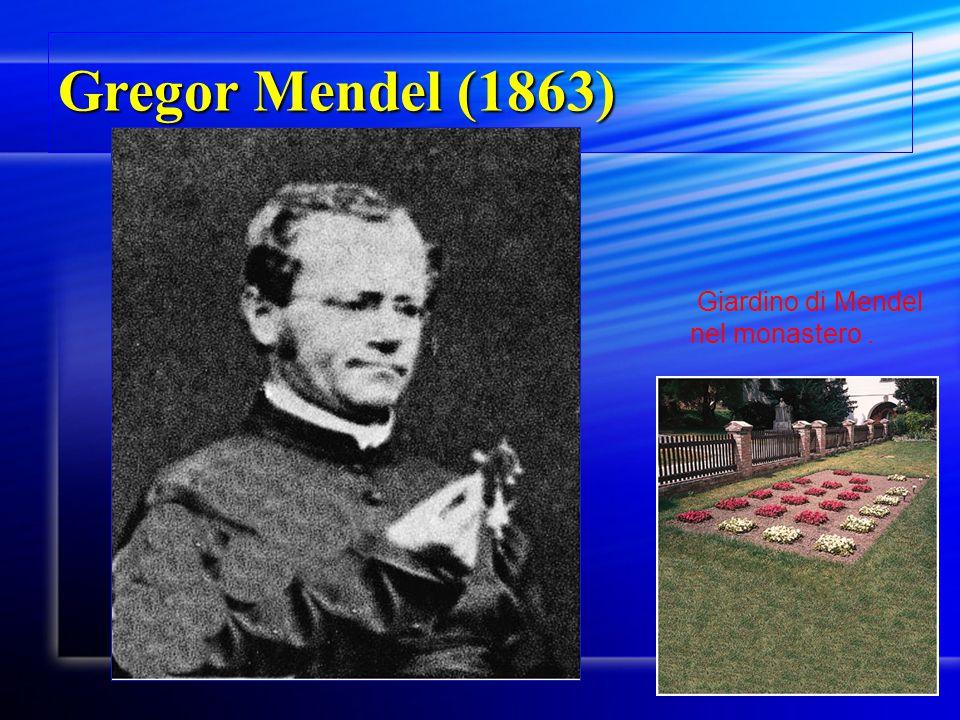 Gregor Mendel (1863) Fig. 2.2 Giardino di Mendel nel monastero.