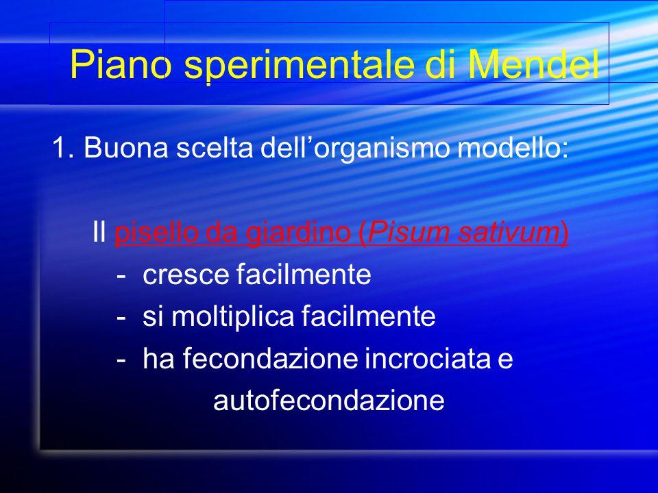 Piano sperimentale di Mendel 1.Buona scelta dell'organismo modello: Il pisello da giardino (Pisum sativum) - cresce facilmente - si moltiplica facilme