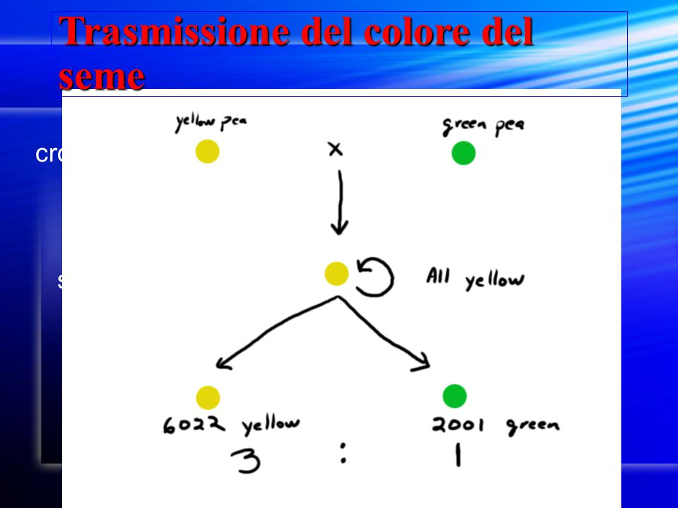 Trasmissione del colore del seme cross-fertilize self-fertilize