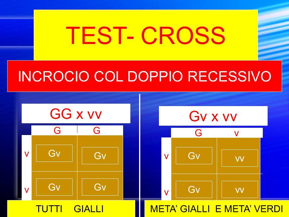 TEST- CROSS INCROCIO COL DOPPIO RECESSIVO Gv x vv GG x vv G v v Gv v v vvGv vv G v TUTTI GIALLIMETA' GIALLI E META' VERDI