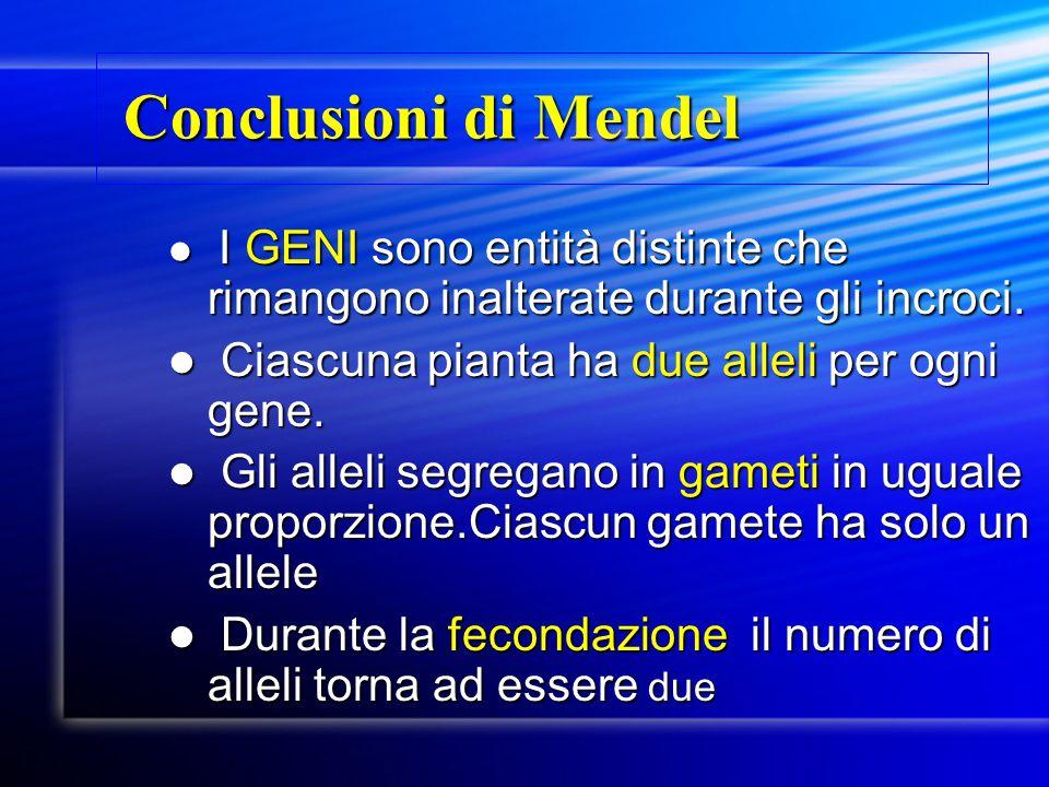 Conclusioni di Mendel Conclusioni di Mendel I GENI sono entità distinte che rimangono inalterate durante gli incroci. I GENI sono entità distinte che
