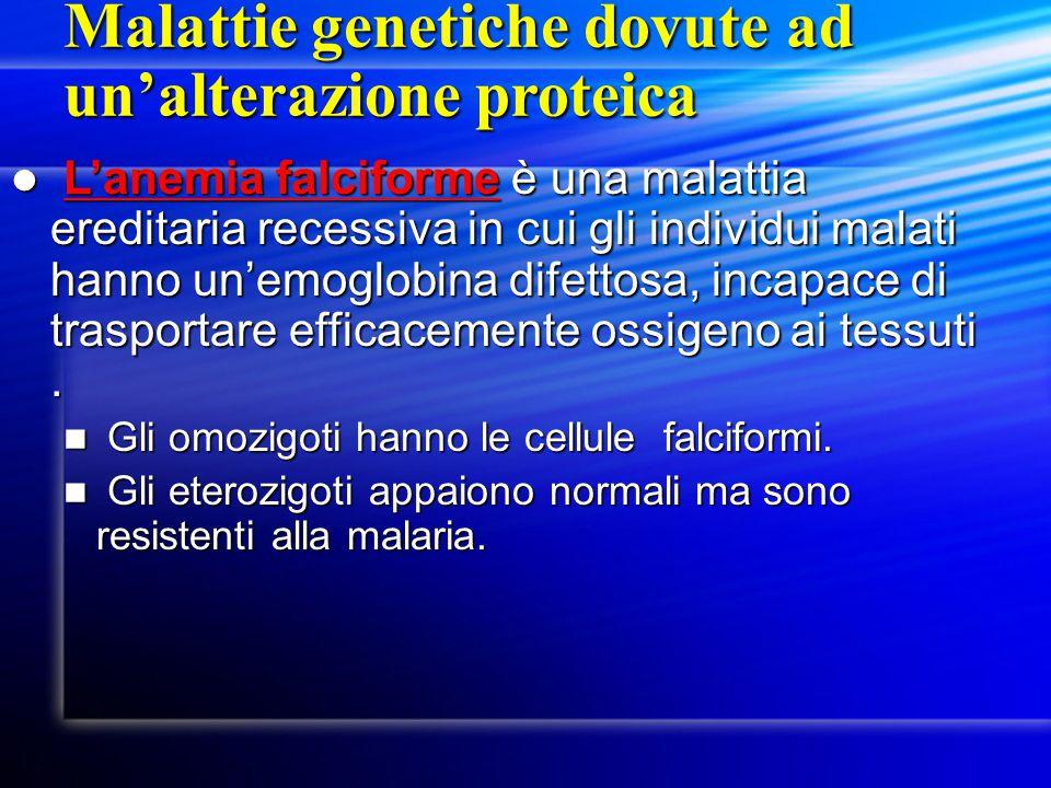L'anemia falciforme è una malattia ereditaria recessiva in cui gli individui malati hanno un'emoglobina difettosa, incapace di trasportare efficacemen