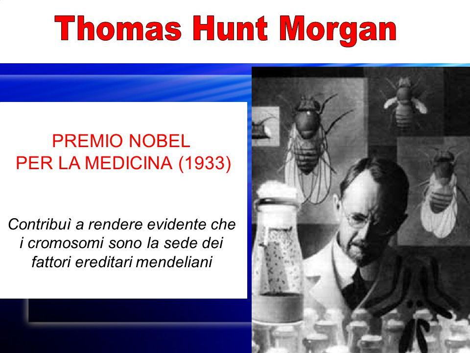 PREMIO NOBEL PER LA MEDICINA (1933) Contribuì a rendere evidente che i cromosomi sono la sede dei fattori ereditari mendeliani