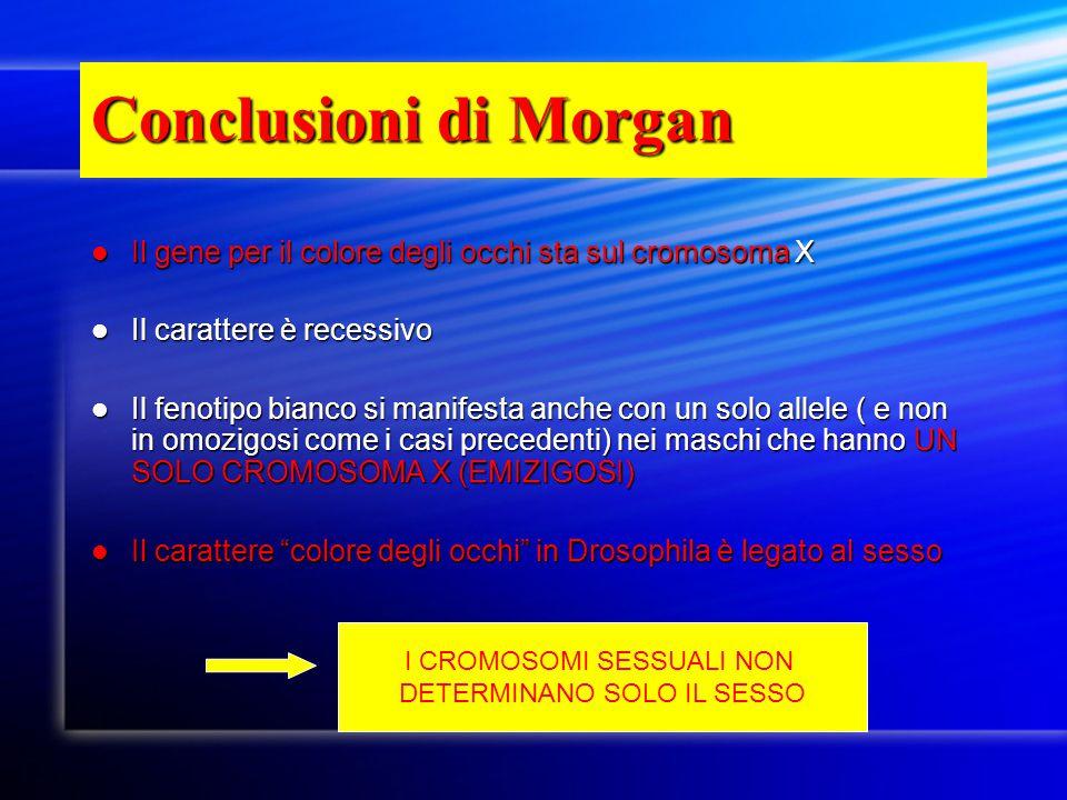 Conclusioni di Morgan Il gene per il colore degli occhi sta sul cromosoma X Il gene per il colore degli occhi sta sul cromosoma X Il carattere è reces