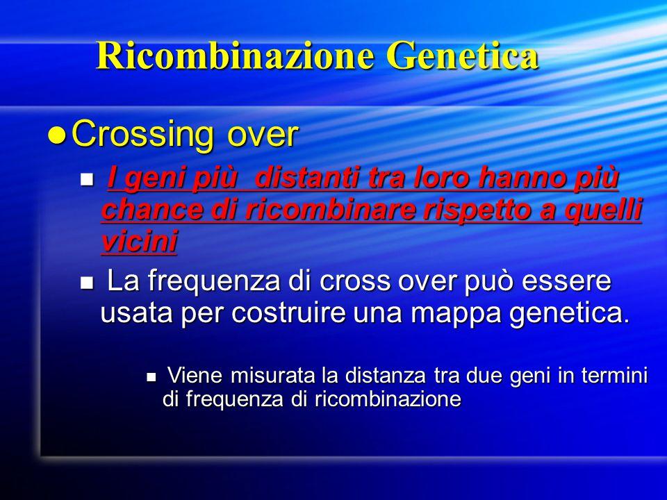 Ricombinazione Genetica Ricombinazione Genetica Crossing over Crossing over I geni più distanti tra loro hanno più chance di ricombinare rispetto a qu