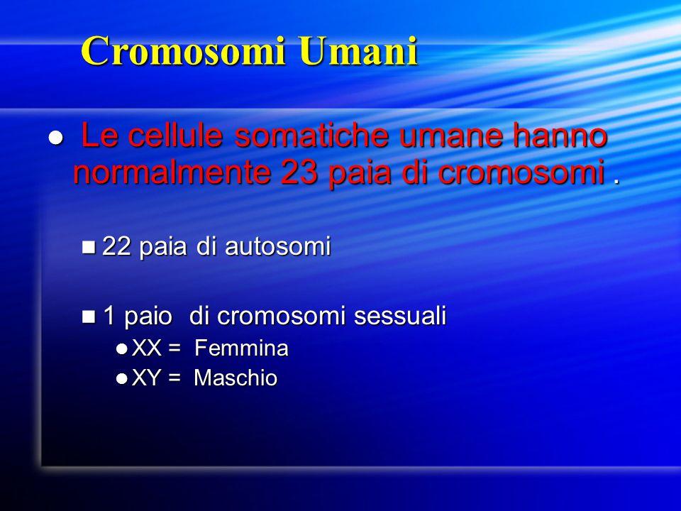 Cromosomi Umani Cromosomi Umani Le cellule somatiche umane hanno normalmente 23 paia di cromosomi. Le cellule somatiche umane hanno normalmente 23 pai
