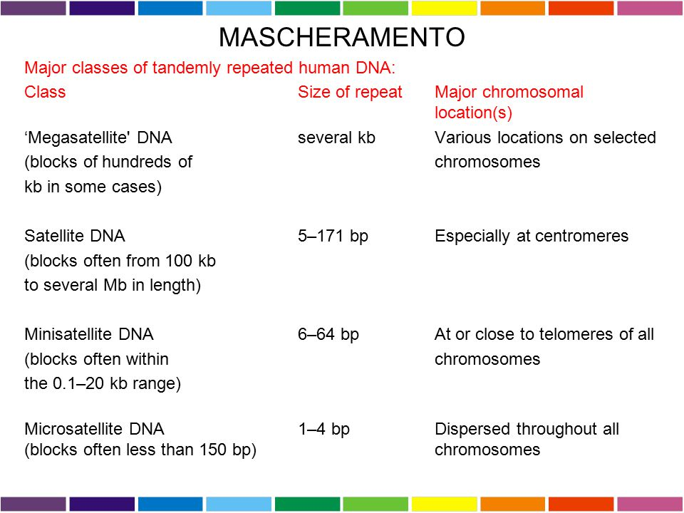 MASCHERAMENTO Major classes of tandemly repeated human DNA: Class Size of repeat Major chromosomal location(s) 'Megasatellite' DNA several kb Various