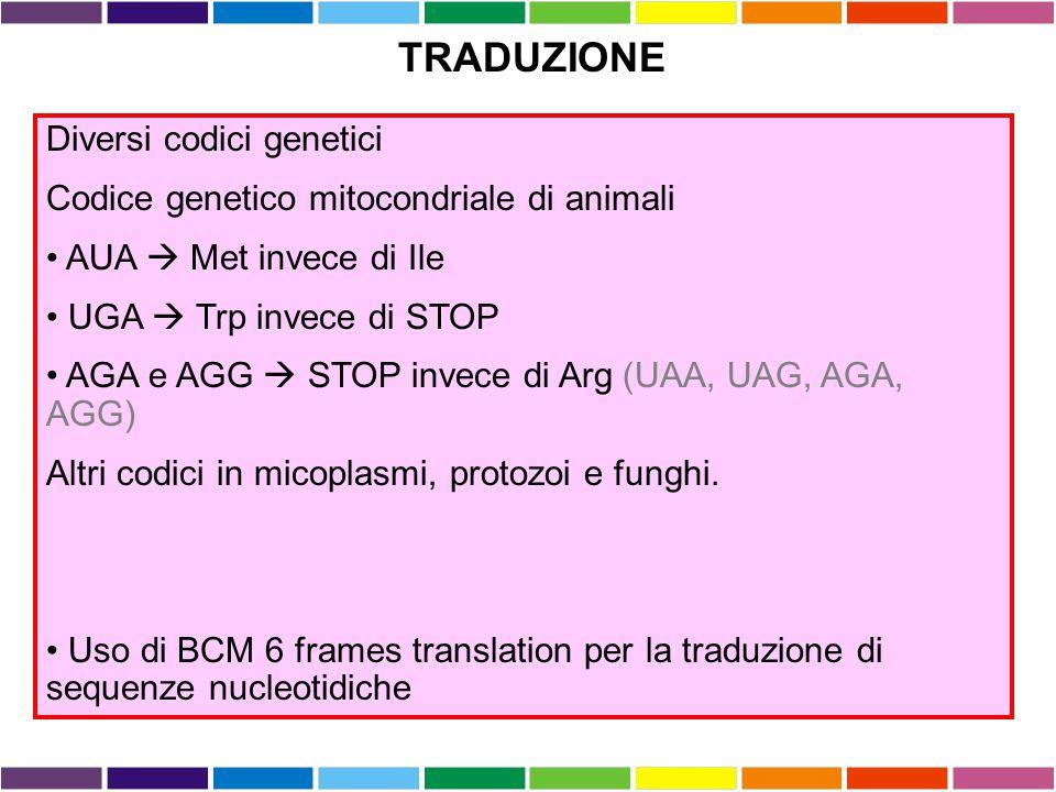Diversi codici genetici Codice genetico mitocondriale di animali AUA  Met invece di Ile UGA  Trp invece di STOP AGA e AGG  STOP invece di Arg (UAA,