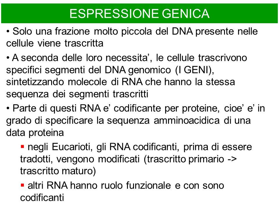 ESPRESSIONE GENICA Solo una frazione molto piccola del DNA presente nelle cellule viene trascritta A seconda delle loro necessita', le cellule trascri