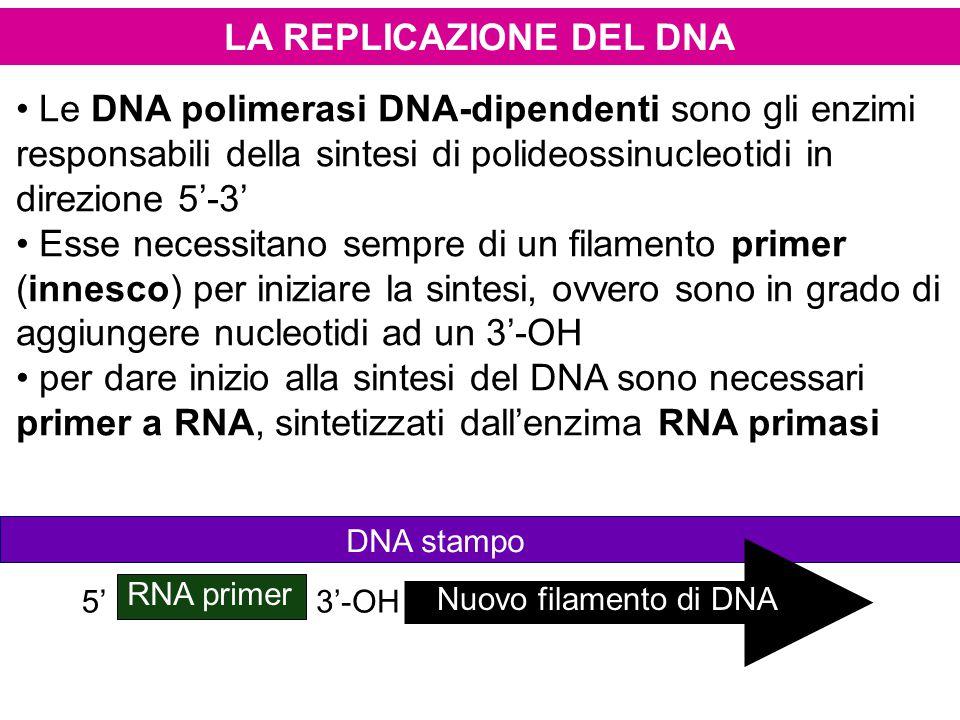 LA REPLICAZIONE DEL DNA Le DNA polimerasi DNA-dipendenti sono gli enzimi responsabili della sintesi di polideossinucleotidi in direzione 5'-3' Esse ne