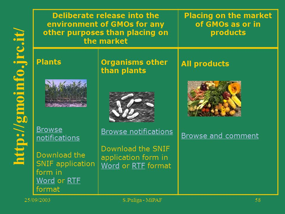 25/09/2003S.Puliga - MiPAF58 Deliberate release into the environment of GMOs for any other purposes than placing on the market Placing on the market o