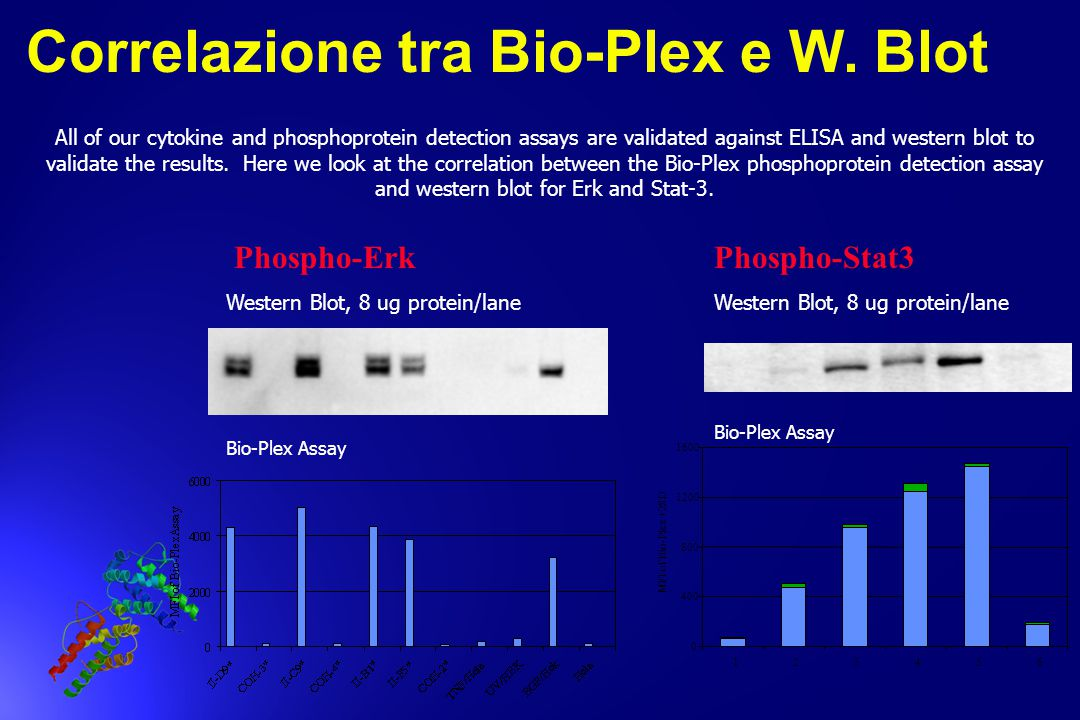 All of our cytokine and phosphoprotein detection assays are validated against ELISA and western blot to validate the results. Here we look at the corr