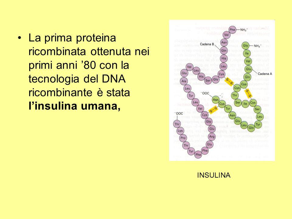 La prima proteina ricombinata ottenuta nei primi anni '80 con la tecnologia del DNA ricombinante è stata l'insulina umana, INSULINA