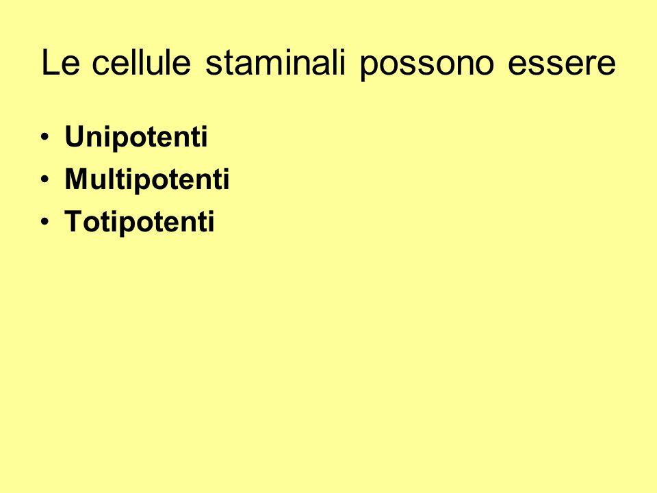 Le cellule staminali possono essere Unipotenti Multipotenti Totipotenti