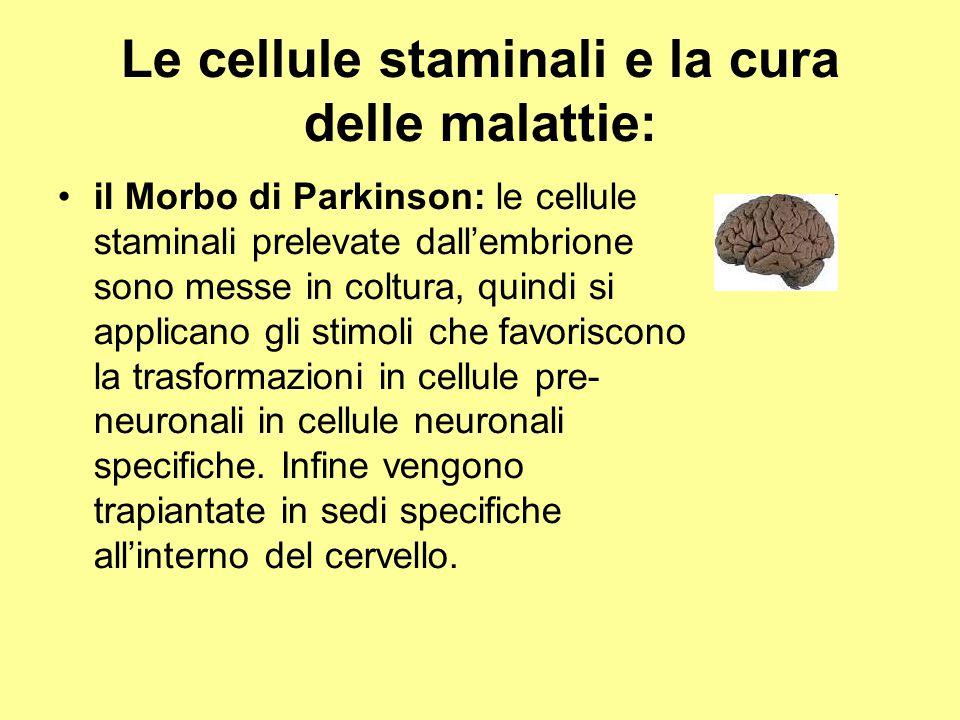 Le cellule staminali e la cura delle malattie: il Morbo di Parkinson: le cellule staminali prelevate dall'embrione sono messe in coltura, quindi si ap
