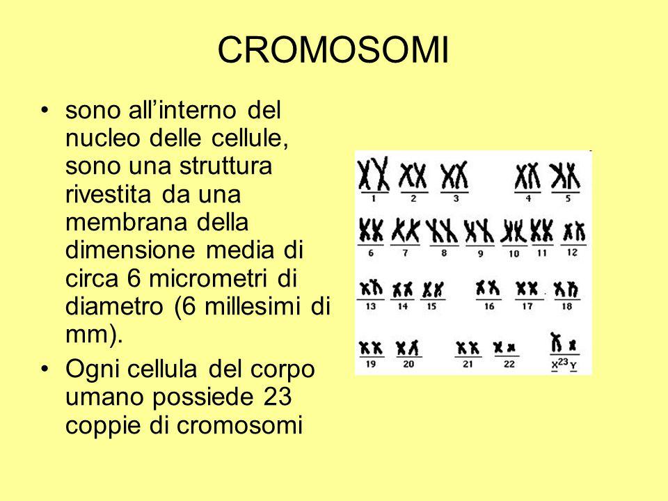 CROMOSOMI sono all'interno del nucleo delle cellule, sono una struttura rivestita da una membrana della dimensione media di circa 6 micrometri di diam