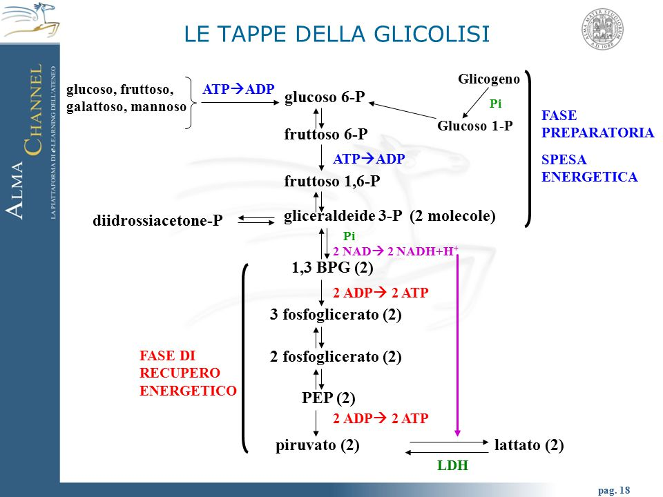 pag. 19 Glicolisi
