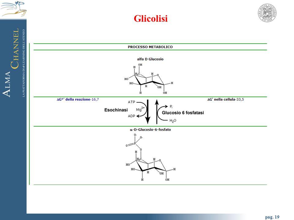 pag. 20 Glicolisi