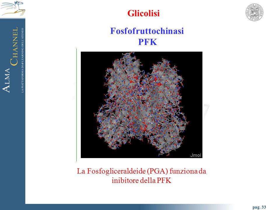 pag. 33 Glicolisi Fosfofruttochinasi PFK La Fosfogliceraldeide (PGA) funziona da inibitore della PFK