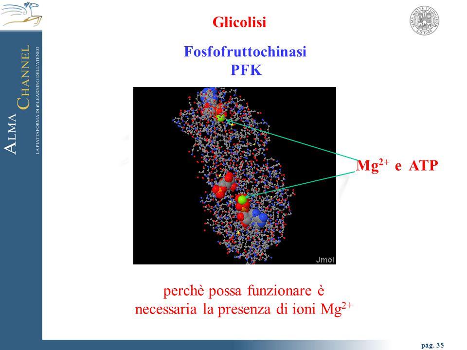 pag. 36 Glicolisi Fosfofruttochinasi PFK amminoacidi che costituiscono il sito catalitico