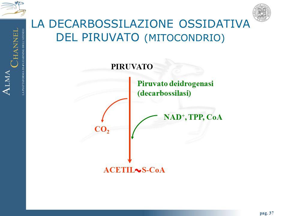 NADH + H + NAD + + + LDH (lattato deidrogenasi) GLICOLISI ANAEROBIA